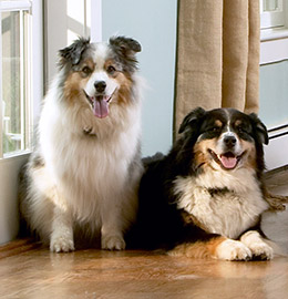 Indoor Pet Boundaries